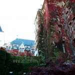NEW - Fall Empress (Victoria BC)