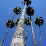 Tall Palms (Los Angeles)