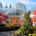 Fall Conservatory (New York)